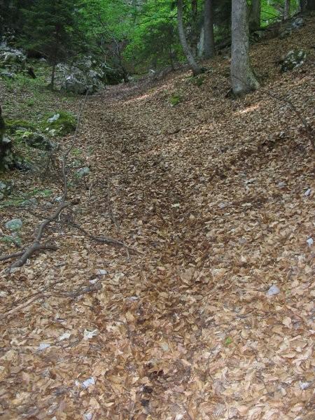 Ko stopiš z Mešenikovih bregov te sprejme mehka gozdna avtocesta ...
