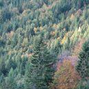 Še barve - pod Vršičem, nad Trento