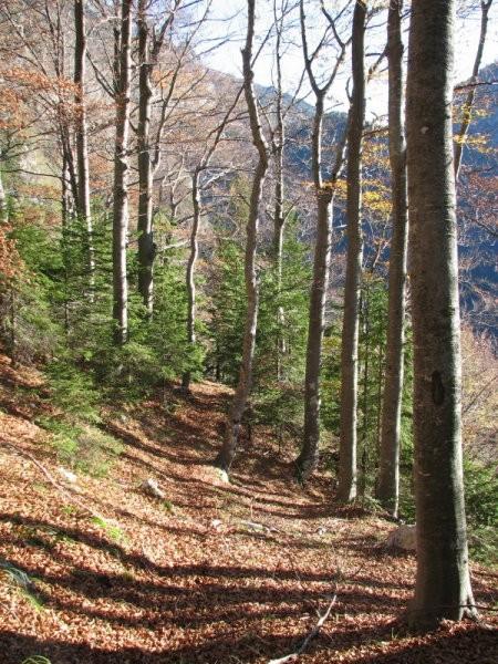Navzdol grede. Še skozi tale drevored, potem se pa ravnina pokonci postavi. Bo treba desno