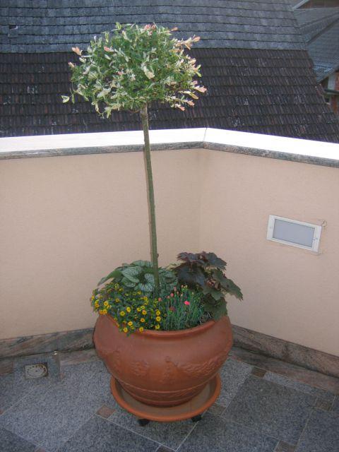 Posoda na terasi