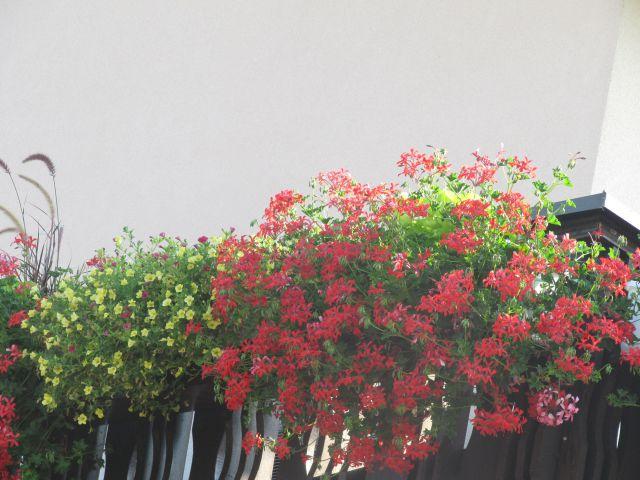 Balkonsko cvetje