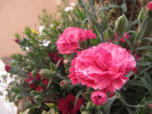 Moje rožice - foto