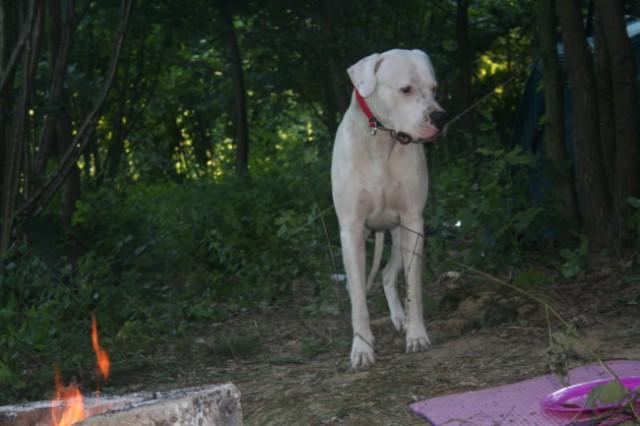 Chuck na kampiranju - foto