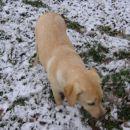 Jupi prvi sneg!!