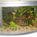 Moj aquarij