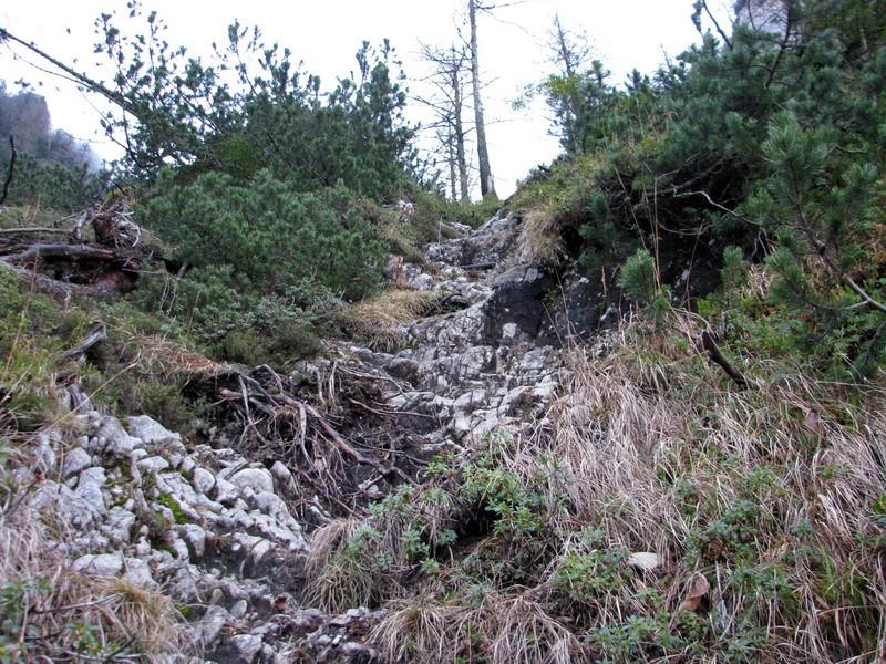 Pot se kmalu postavi pokonci in strmina vse do grebena ne popusti kaj dosti.