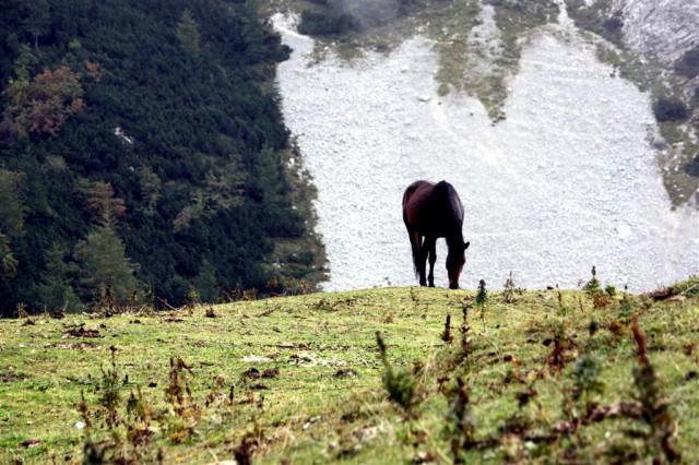 Na planini Koren se pasejo konjički.