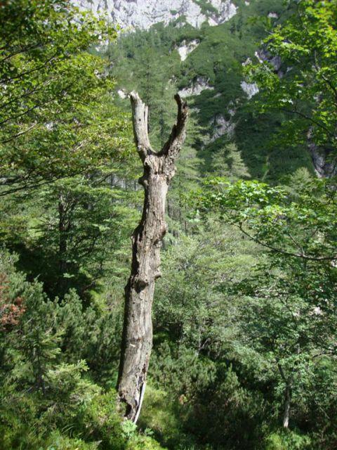 Humar - Škarja - 1.8.2010 - foto