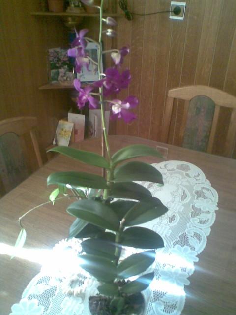 Orhideja - foto