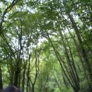 še prej pa po tem gozdu..