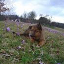 v cvetju :)