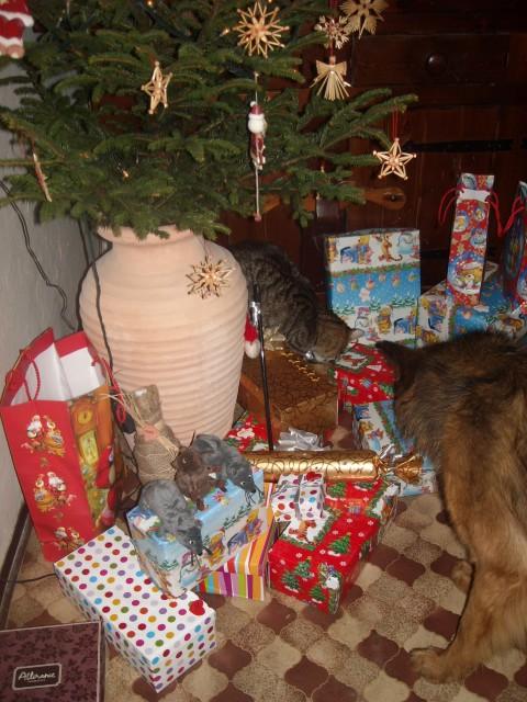 Tara & Mirko iščeta svoje darilo