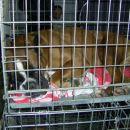 razstava psov (sobota 14.1.2006)