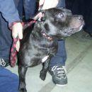 razstava psov (nedelja 15.1.2006)