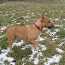 Chayenne - puppies (new)