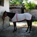 Mala slatka kobila Naomi