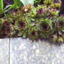 Avtor: babaco, rastline.mojforum.si