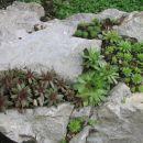 Avtor: arena rastline.mojforum.si