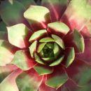 Avtor: katrinca rastline.mojforum.si