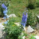 Avtor: vrtnarka rastline.mojforum.si