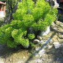 Euphorbia - Mleček, Avtor: potonka rastline.mojforum.si