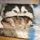 December je leto 2006 , imam 12 let in pol zato malce več počivam :-)