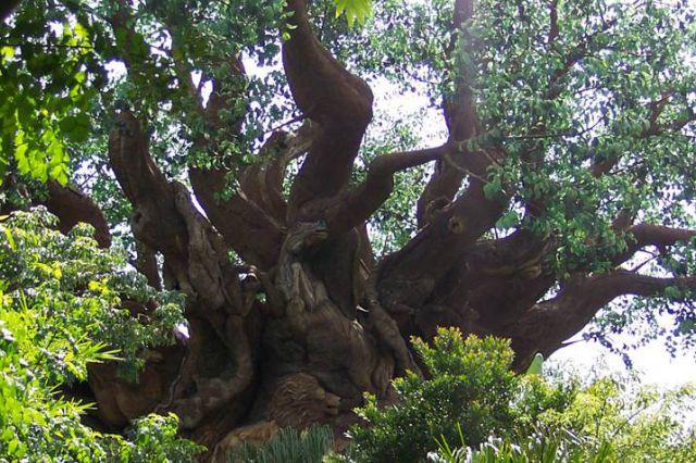 Drevo iz Južne Afrike - foto