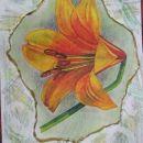 orange lilly - to fuschia