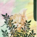 cats 2 (6/6)