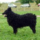 hrvatski ovcari