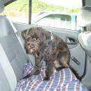 Prijavite jo društvu proti mučanju živali,...spet se moram voziti z avtom ;( ...