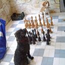 Dolgčas preganjava s šahom