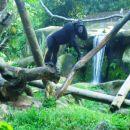 Živali so že na prvi pogled zdrave, imajo veliko prostora in so v kletki vedno v paru ali