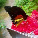 V soseščini: mini park znotraj parka z množico metuljev. nekatere je bolje opazovat samo o