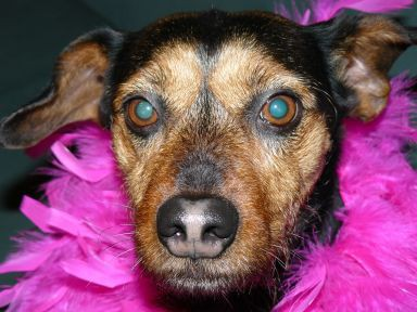 Aisha - najbolj otročji 8,5 let star pes :)