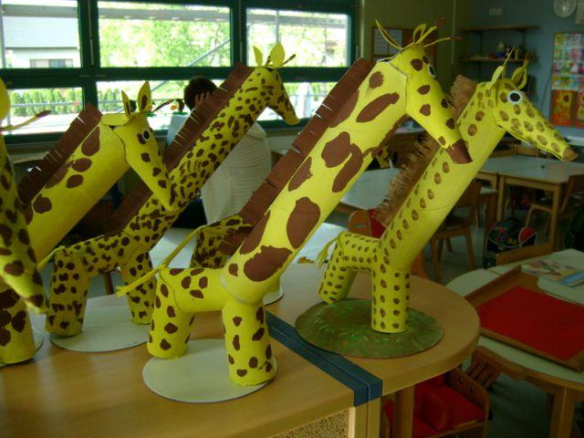 Žirafe - foto