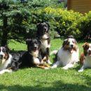 Od leve proti desni; Bejba, Urko, Tax, Chip, Ruby Foto: Martina Oitzl