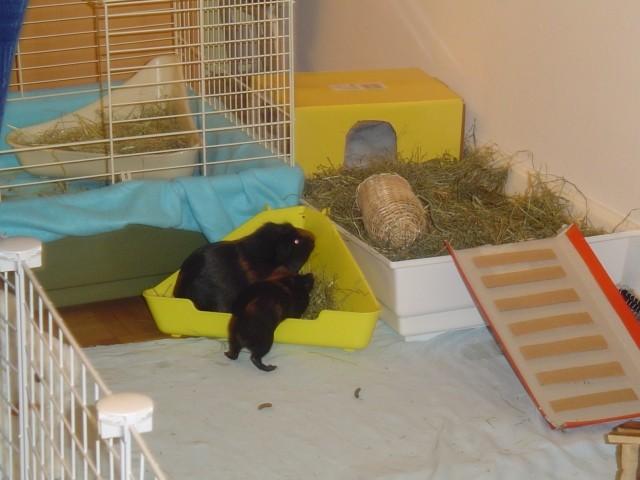 Tinchek in Toby - veliki in mali pujs!