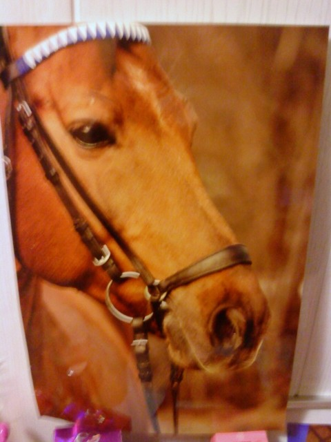Pred kratkim so mi iz hleva ukradli konja.Ker se do danes ni nič premaknilo sem se odločil