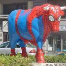 Spider bull