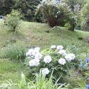 lesnata potonika v vsej svoji lepoti