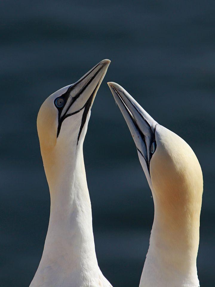 Helgoland 2012 - foto povečava