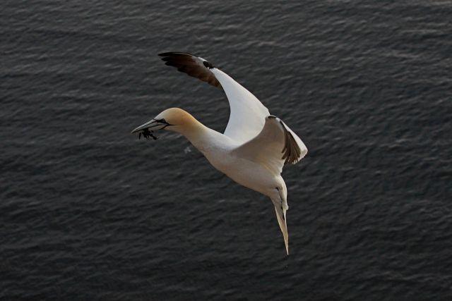Helgoland 2012 - foto