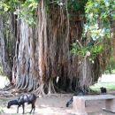 Eksotika dreves velikanov