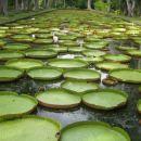 Ena največjih zanimivosti v tamkajšnjem botaničnem vrtu....ja, to je rastlina:))