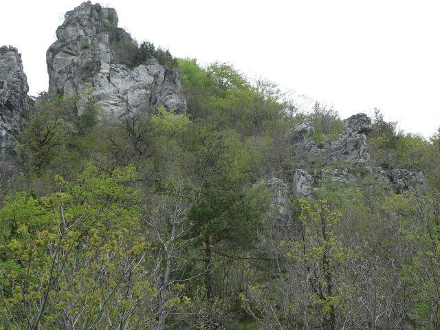 Kopitnik-2.5.2010 - foto