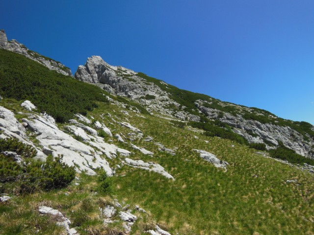 črni hriber-ute-krofička-ojstrica  6.7.2017 - foto