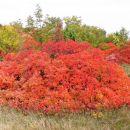 Oranžna kopa