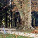 Mokrice v jeseni - obržanc
