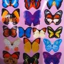 **3D metuljčki**